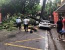 Cây to đổ ngang đường trong cơn mưa lớn, một phụ nữ bị thương