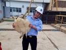 Giải cứu đồi mồi hơn 10kg vướng guồng bơm nhà máy nhiệt điện