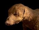 """Khám phá """"thế giới của người chết"""", phát hiện hàng triệu xác ướp động vật"""