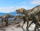 Phát hiện hoá thạch loài khủng long mỏ vịt bí ẩn sống ở Nhật Bản 72 triệu năm trước