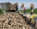 Trung Quốc sang Campuchia tìm bạn, thế mạnh tỷ USD Việt lao dốc