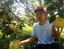 Rời Thủ đô, vợ chồng cử nhân xứ Thanh về quê trồng bưởi, ổi, cam ....thu tiền tỷ