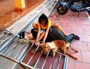 Bắt giữ hơn 10 đối tượng bắt trộm hơn 40 con chó trong đêm