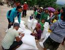 Phân bổ 1.000 tấn gạo cho người dân vùng lũ