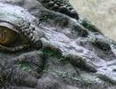 """Loài khủng long bí ẩn được xác định """"nhầm"""" hàng thập kỷ"""
