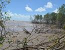 Hết bờ biển Tây, Cà Mau lại ban bố tình huống khẩn cấp sạt lở bờ biển Đông