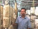 Thanh Hóa: Bỏ việc nhà nước về kiếm 300 triệu đồng/năm từ trồng nấm