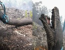 Trăn khổng lồ thiệt mạng trong cháy rừng ở Indonesia
