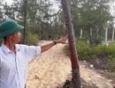 Bất ngờ tạm dừng dự án điện gió tại Bình Định vì để 140ha rừng dương bị xóa sổ!