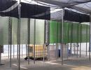 """Vi tảo """"Made in Vietnam"""": Mục sở thị công nghệ nuôi tảo Spirulina của các nhà khoa học Việt"""