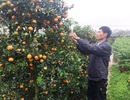 """Thanh Hoá: Người trồng hoa Tết """"nín thở"""" vì thời tiết thất thường"""