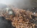 Tiêu hủy gần 4 tấn chân gà trôi nổi không rõ nguồn gốc