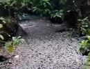 Kinh hãi nước trong kênh hào Thành Cổ đột ngột chuyển đen như mực!