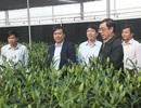 """Quảng Trị quyết biến đỉnh Sa Mù thành """"tiểu Đà Lạt"""" nhờ nông nghiệp công nghệ cao"""