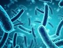 Phát hiện 2 chủng vi khuẩn kháng kháng sinh chết người mới trong máu bệnh nhân ở Trung Quốc