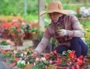 Làng hoa thành Vinh nhộn nhịp vào mùa Tết