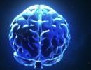 Bộ não của 3 người đã được kết nối thành công và có thể chia sẻ suy nghĩ