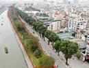 Hà Nội: Toàn cảnh hàng cây xanh trên đường Láng trước ngày chặt hạ