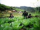 Thanh Hóa: Chuyện trồng ngô thoát nghèo ở nơi ...một năm chơi 8 tháng