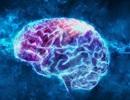 Trí tuệ nhân tạo có thể giải mã ngôn ngữ từ sóng não trong tương lai