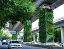 """Xem Mexico """"phủ xanh"""" trụ đường cao tốc để giải quyết nạn ô nhiễm"""