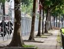 Vì sao Hà Nội chặt cây, xén đường vào dịp cuối năm?
