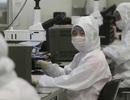 """Thời buổi """"khó sống"""" của giới nghiên cứu Trung Quốc tại Mỹ"""