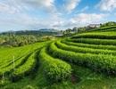 """Điều kỳ diệu ở Bang đầu tiên của Ấn Độ """"hữu cơ hóa"""" 100% nền nông nghiệp"""