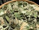 Loại lá mọc tràn ao bùn Việt Nam, 400 ngàn đồng/kg, chị em ưa dùng để giữ eo
