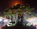 Choáng với cây sanh cổ được khách Nhật định giá hơn 20 triệu USD