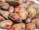"""Bước đầu xác định đối tượng tung tin """"ăn sò lụa đỏ bị ngộ độc"""""""