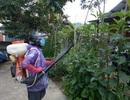 Quảng Nam đối mặt sốt xuất huyết gia tăng ồ ạt