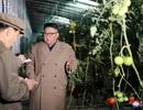 Ông Kim Jong-un thăm trang trại trồng rau trước nguy cơ thiếu lương thực