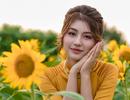 Mùa thu về dịu dàng trên cánh đồng hoa hướng dương Hà Nội