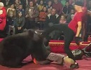 Video gấu nặng 270 kg bất ngờ vồ người huấn luyện khi trình diễn