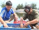 Anh nông dân Quảng Bình thu lãi 1,5 tỷ đồng mỗi năm nhờ nuôi ốc hương