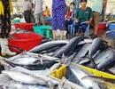 Nhiều tàu cá về bờ sau bão số 5, phấn khởi vì giá cá bất ngờ tăng vọt