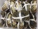 Đặc sản giới thượng lưu Trung Quốc, ở Việt Nam tràn chợ 45 ngàn đồng/con