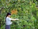 """Cận cảnh cuộc sống đẹp như mơ của cô gái được ví là """"tiên nữ đồng quê"""" của Việt Nam"""