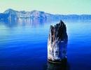 """Khúc gỗ """"thách thức"""" mọi định luật vật lý, nổi trên mặt nước suốt trăm năm không phân hủy"""