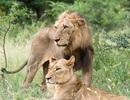 8 triệu học sinh tiểu học sẽ được học về  bảo tồn động vật hoang dã nguy cấp