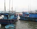 Cấm biển, cưỡng chế các hộ dân khu vực nguy hiểm để ứng phó với bão số 6
