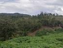 Chuyển cơ quan điều tra vụ BQL rừng để mất hơn 1.400ha rừng