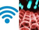 """""""Chỉ điểm"""" thủ phạm gây ung thư có nguồn gốc từ sóng Wi-fi"""