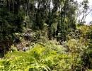 Đẩy mạnh trồng rừng gỗ lớn để hạn chế phá rừng và phát triển kinh tế miền núi