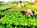 Vùng kinh tế trọng điểm miền Trung: Khai thác tiềm năng du lịch dựa vào nông thôn