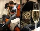 Hành khách lén đưa mèo lên máy bay, còn chụp ảnh khoe chiến tích