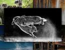 """""""Cuộc chiến của thỏ"""" đạt giải cao nhất tại Cuộc thi nhiếp ảnh thế giới"""