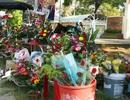 Quảng Nam: Nhộn nhịp thị trường hoa, quà tặng dịp 20/11