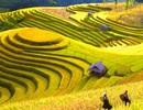 """Đâu là """"điểm nghẽn"""" trong phát triển du lịch Việt Nam"""